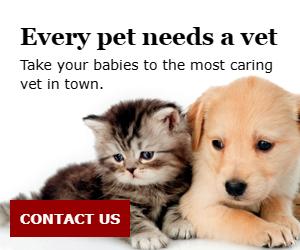 Every Pet Needs A Vet