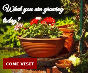What you are growing today?