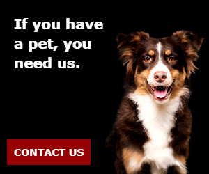 If you have a pet, you need us.