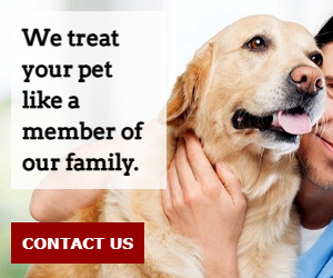We treat your pet like a member of our family.