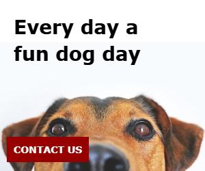 Every day a fun dog day