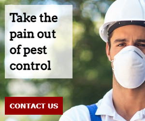 Take the pain out of pest control