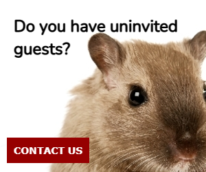 Do you have uninvited guests?