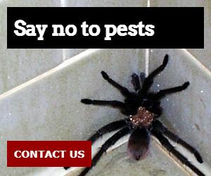 Say no to pests