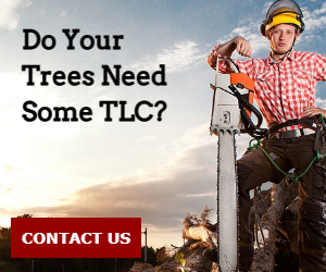 Do Your Trees Need Some TLC?