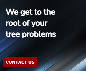 We get to the root of your tree problems
