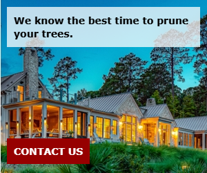 We know the best time to prune your trees.